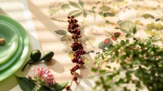 乾燥の気になる秋冬こそ、植物と寄り添う生活でツヤ肌ボディへ