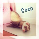 coco1206さん