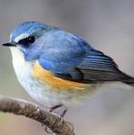 僕と青い鳥さん