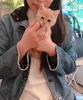 美容大好き猫さん
