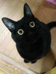黒の猫のママさん
