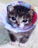 シャンプー猫ちゃんさん