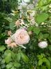 pink.flowerさん