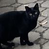 モフ猫クロちゃんさん