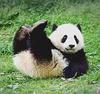 パンダかわいいさん