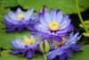 **紫の花**さん