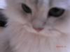 mimiaさん
