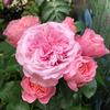 happy_beauty_roseさん